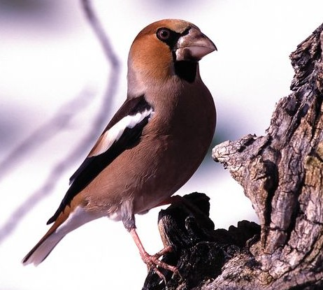 oiseau_au_jardin_2.jpg